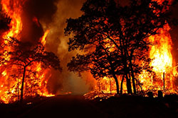 وقوع 9 مورد آتش سوزی مراتع و جنگل ها از ابتدای سال تاکنون در دزفول