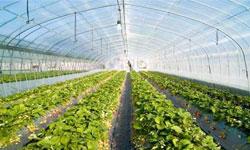 امکان تغییر گلخانه های دزفول از سنتی به صنعتی و ایجاد گلخانه جديد فراهم شد