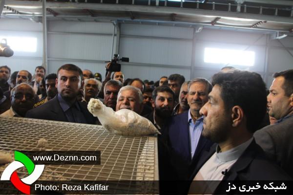 کارخانه تولید کمپوست در دزفول افتتاح شد